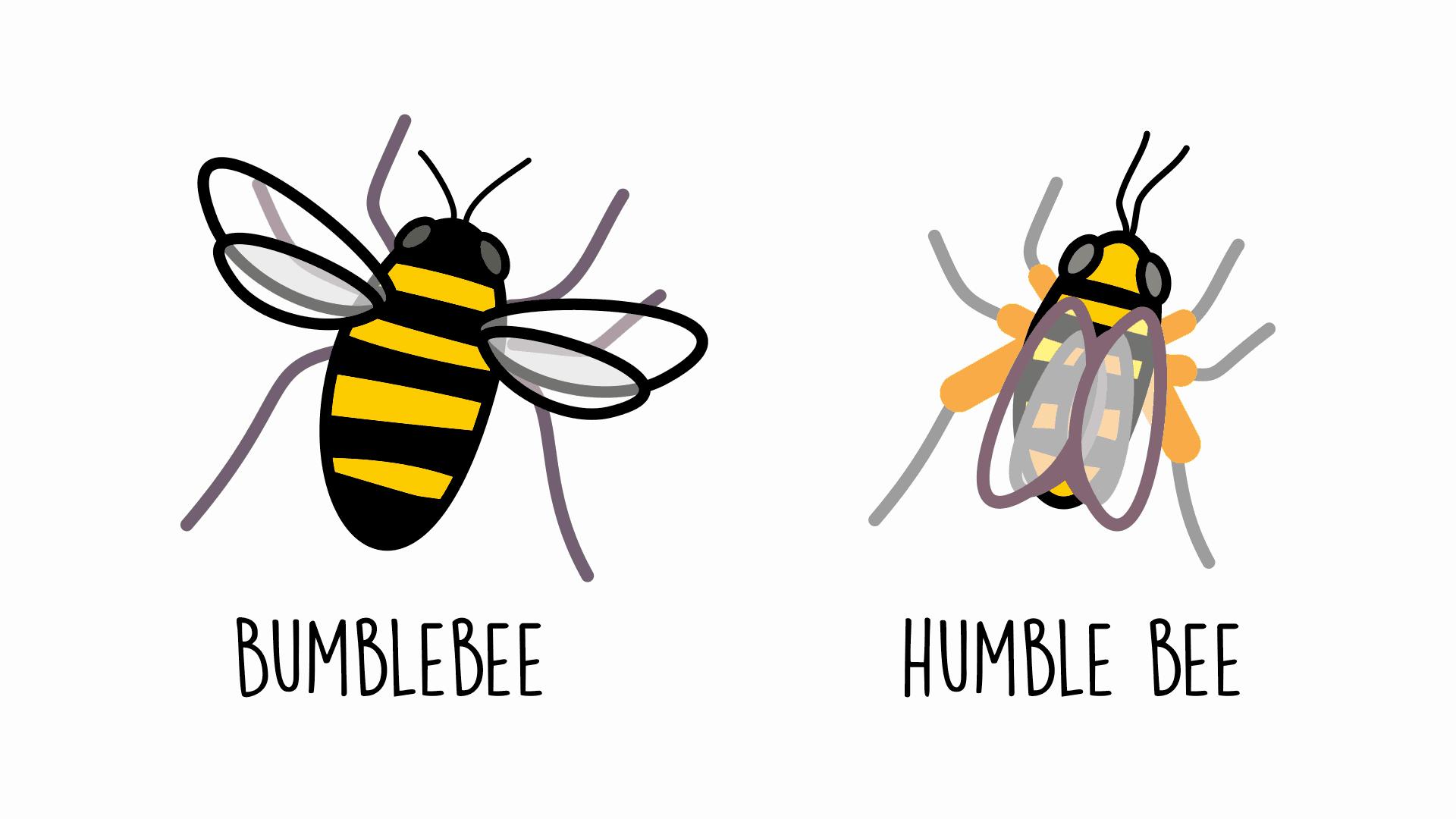 bumblebee-humble-bee-1920-1080